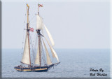 The Tall Ships Enter Oswego Harbor Gallery