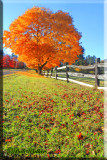 Fall Foliage Ablaze