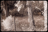 Fences and Trees