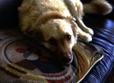 Toby's sick