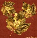 leaf finding