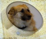 Toby in a circle