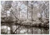 Morikami Gardens #1 (false color)