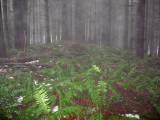 Tiger Mountain S.F. - South Tiger Mountain