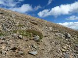 COLORADO - SAN ISABEL N.F. - MOUNT ELBERT