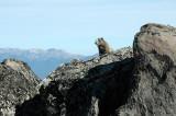 Okanogan N.F. - Tiffany Mountain
