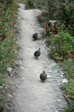 Birds on Trail