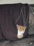 2011_02_09 Bok drops in - makes himself at home