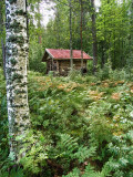 Tree and forest cabin