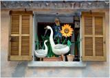 Sunflower & geese