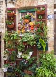 Flower Garden at No12
