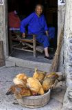 Hmong elder feeding her chickens.
