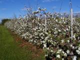 Apple Blossom Time ~ Annapolis Valley, Nova Scotia