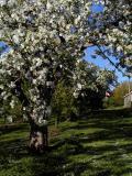 Tom's Orchard ~ Mochelle, Nova Scotia