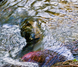 Swirling waters