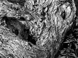 A gnarled  tree trunk.