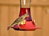 Hummingbird? I don't think so!!