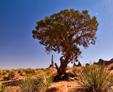 A desert tree with Totem Pole rock in the background