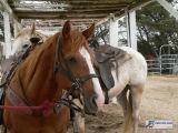 Horses and Hang Gliding  - July 9,  2006