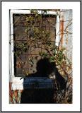 Shadow Framed