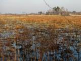 Rezerwat Somine(IMG_7158.jpg)