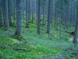 Las nad Połoniną Mszana(IMG_8162.jpg)