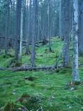Las nad Połoniną Mszana(IMG_8163.jpg)