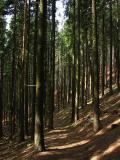 Ścieżka zboczami Romanki(IMG_2571.JPG)