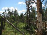 Las ochronny Szast po wichurze 4 lipca 2002(IMG_3190.JPG)