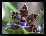 20051218 - Flower -