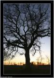 20051219 - Tree -