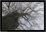 20060106 - Tree -