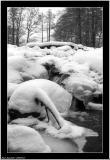 20060127 - Snow & Ice -