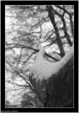 20060128 - Tree top -