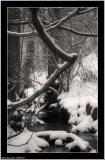 20060131 - Tree branch  -