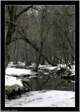 20060216 - In the wood -