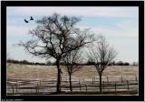 20060219 - Bird in tree -