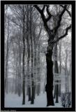 20060326 - Forrest -