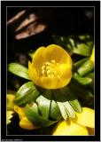 20060330 - It´s yellow -