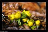 20060403 - Wonderful spring -