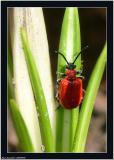 20060408 - Bug -