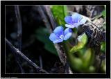 20060427 - Blue -