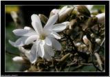 20060507 - White -