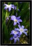 20060509 - Blue -