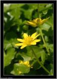 20060514 - Yellow -