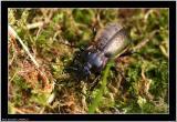20060522 - Bug -