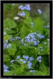 20060524 - Blue -