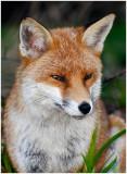 fox15.jpg