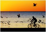 sunsetBike1.jpg