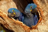 South American Wildlife